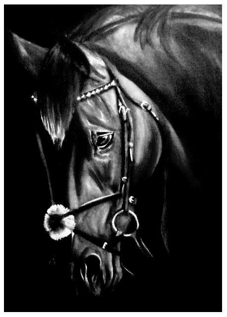 Black Beauty por jolabrodnica
